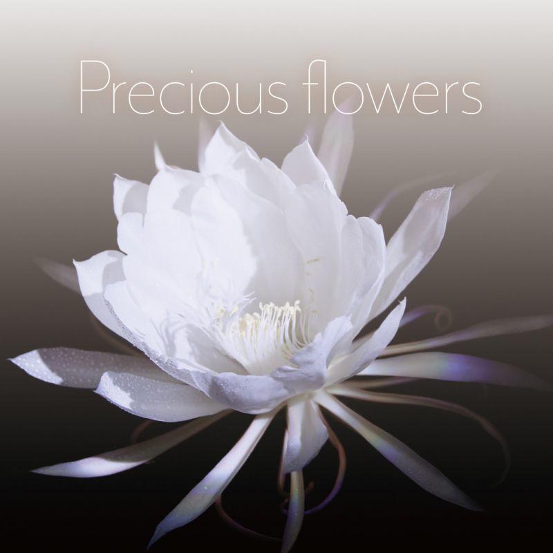 Photo1: Precious flowers (1)